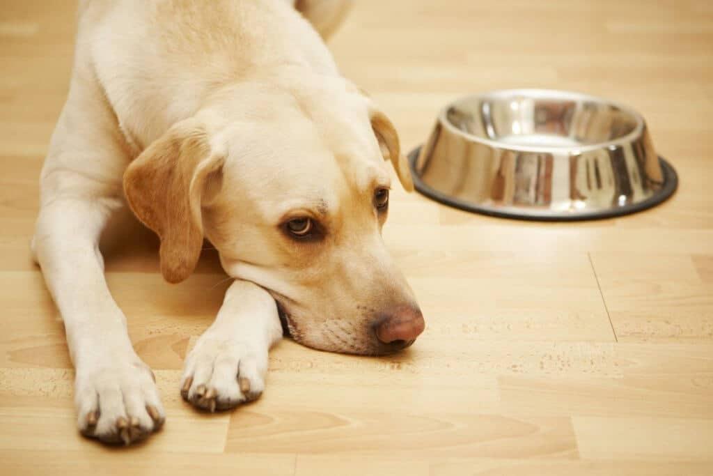 Futterwahl bei Hunden