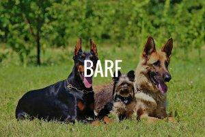 Barfen für Hunde