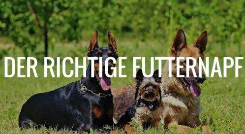 Den richtigen Futternapf für den Hund finden