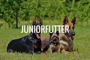 Juniorfutter