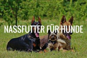 Nassfutter für Hunde