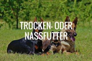 Trocken- oder Nassfutter für den Schäferhund