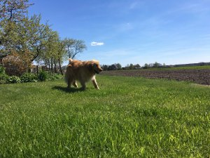 Hundefutter im Praxistest