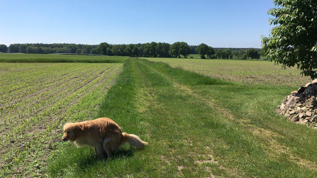 Hund kotet in die Natur