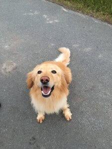 Bio Hundefutter im Check