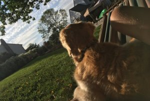 Ruhpause nach Fressen Hunden