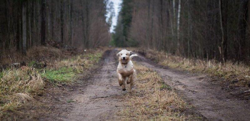 Hund im Wald Zeckengefahr