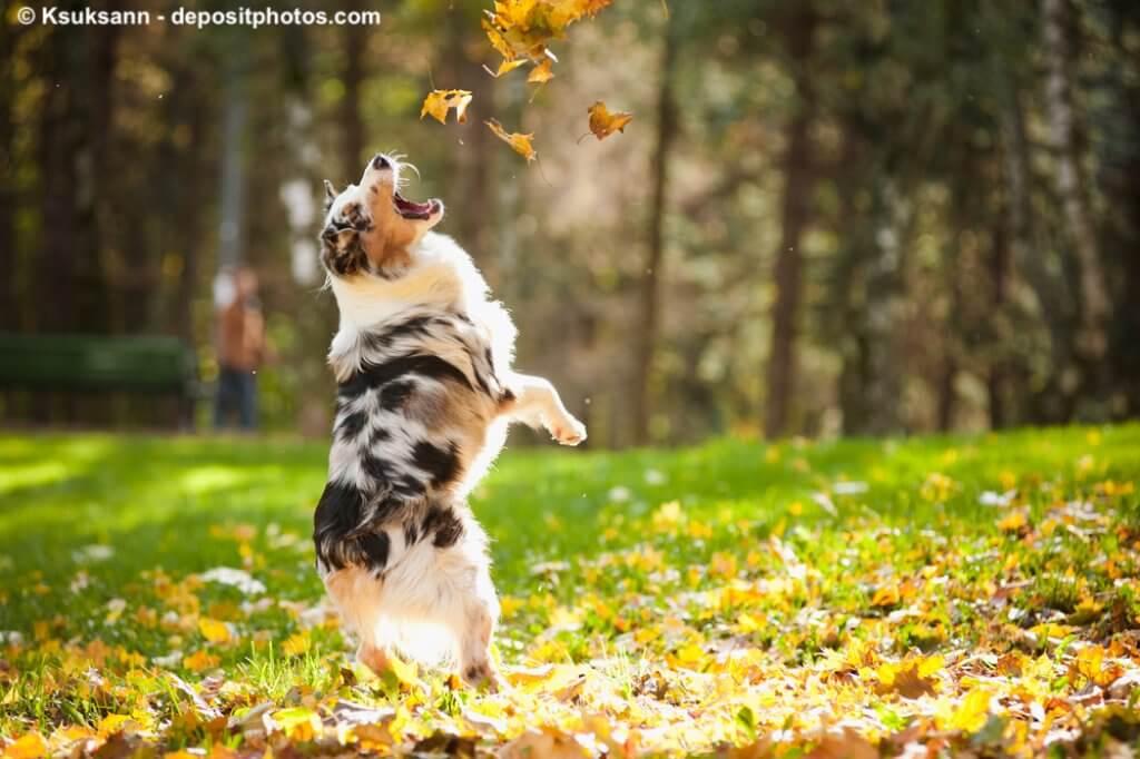Sportlicher und beweglicher Hund