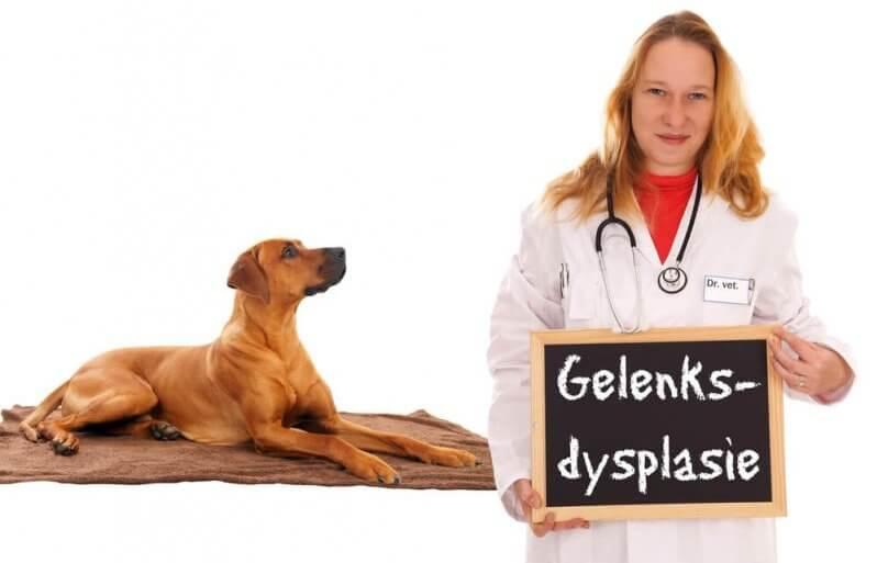 Gelenksdysplasie beim Hund