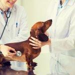 Hund zur Untersuchung beim Tierarzt
