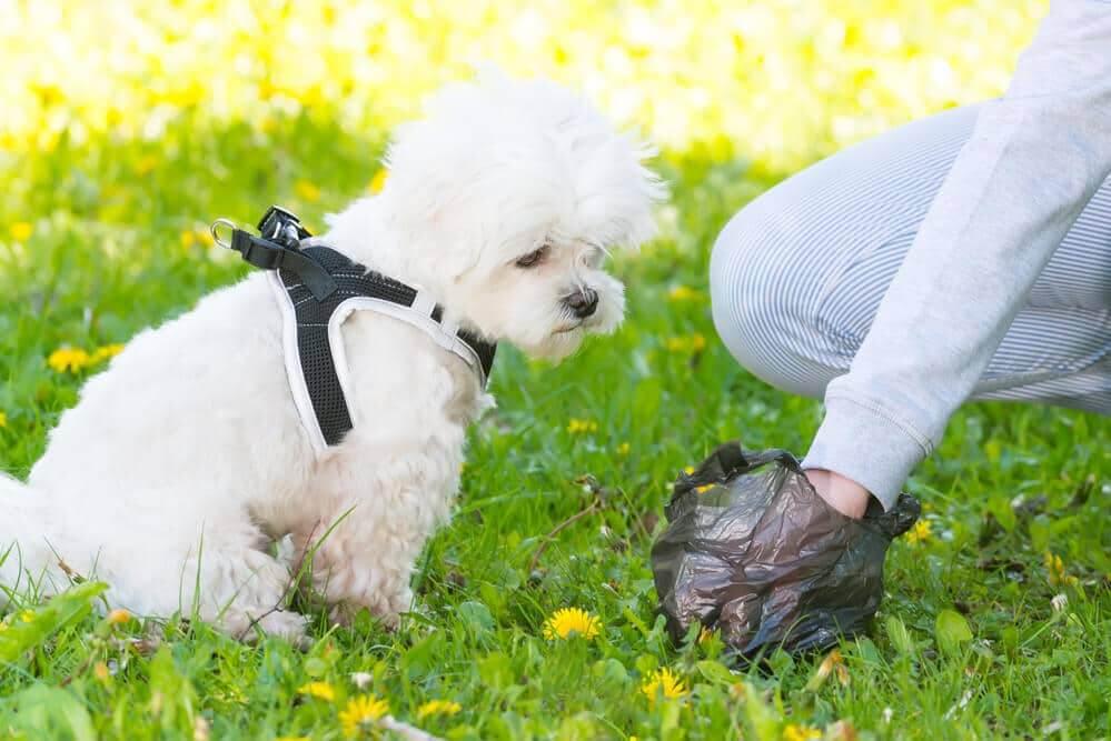 Was sagt uns der Hundekot über Gesundheit des Hundes