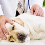 Kranker Hund beim Tierarzt