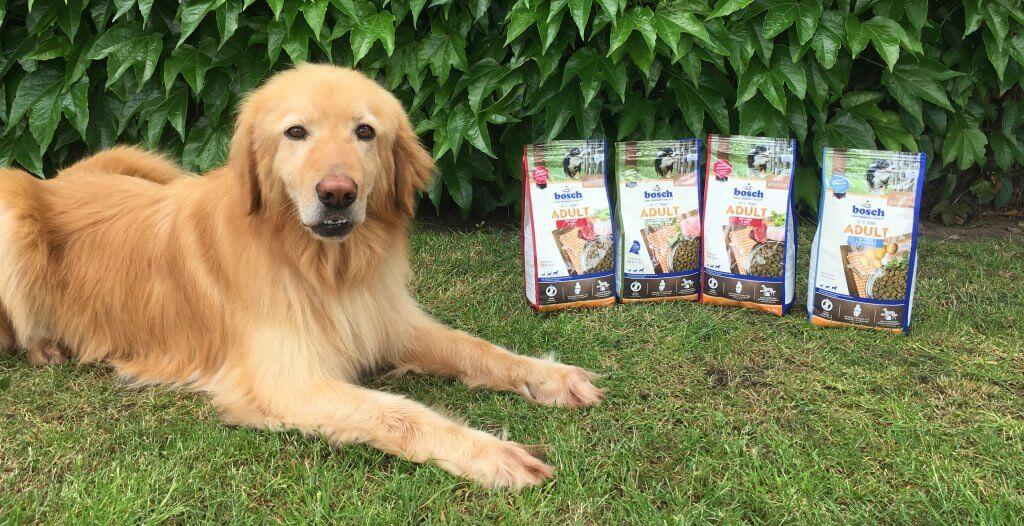 Bosch Adult Hundefutter Test