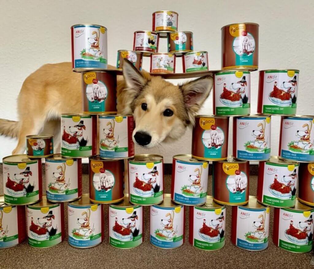 Anifit Hundefutter Praxistest
