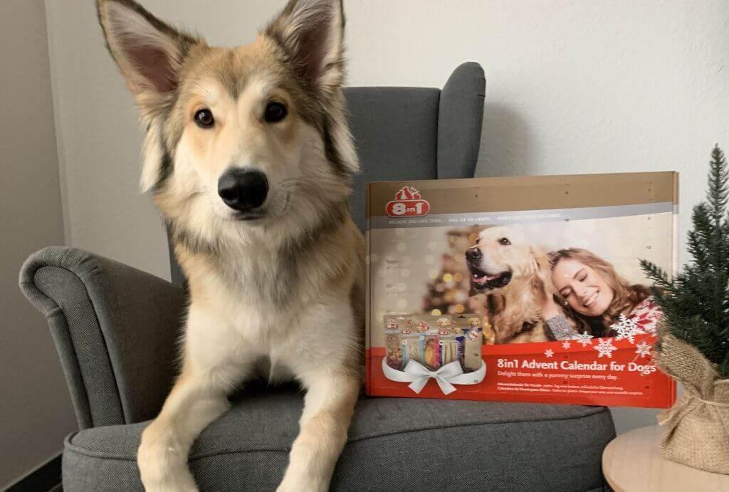 8in1 Adventskalender für Hunde