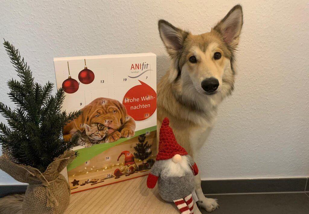 Anifit Adventskalender für Hunde