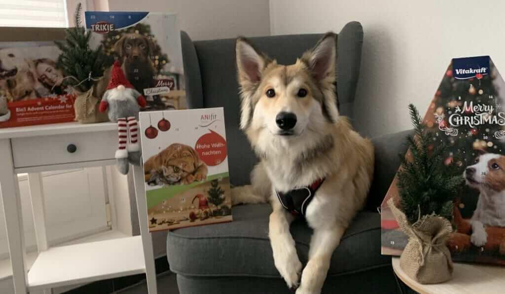 Hunde Adventskalender im Test