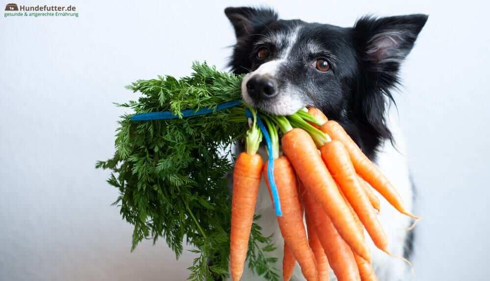 Hund mit Karotten