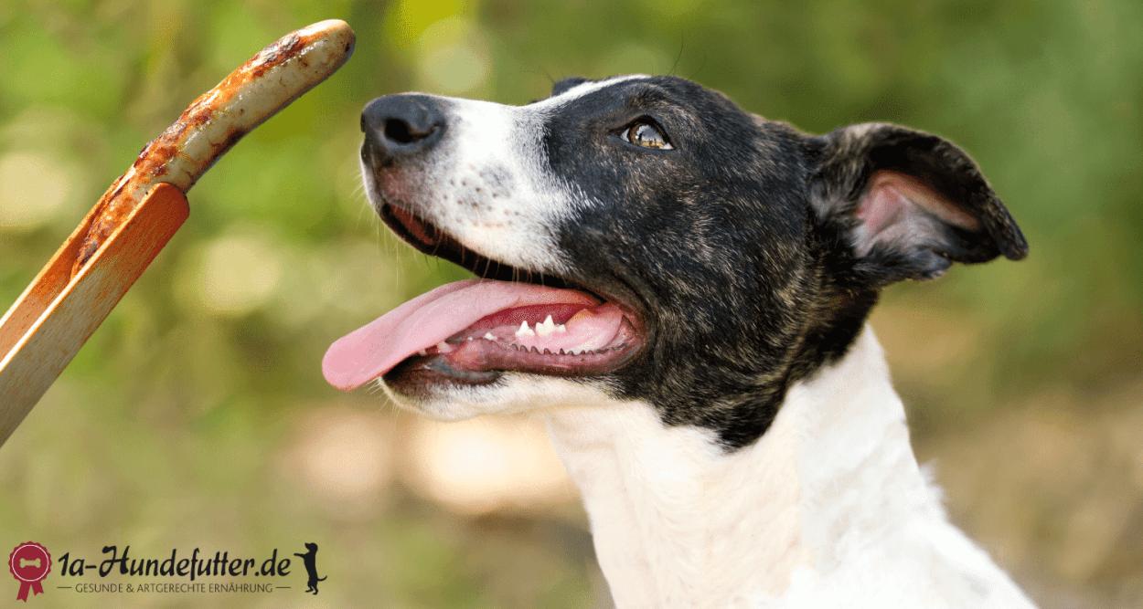 Drüfen Hunde Bratwurst fressen?
