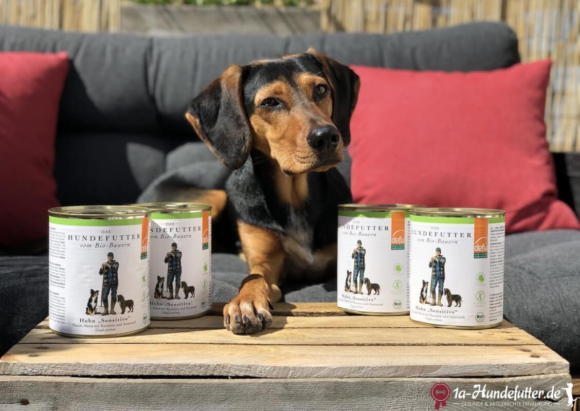 defu Hundefutter Test