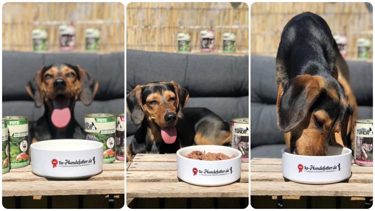 Tundra Hunde Nassfutter Test